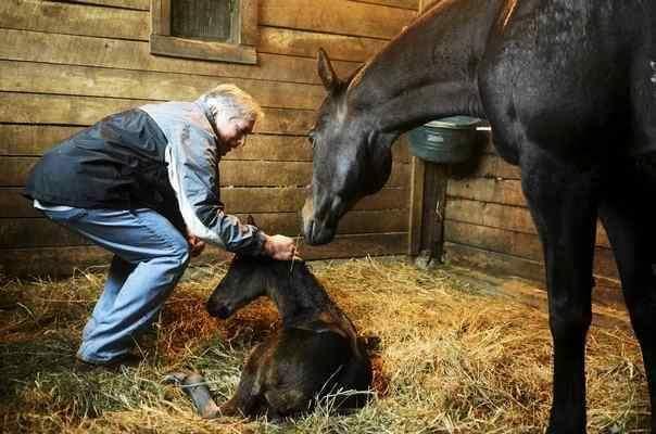 Glenn horse